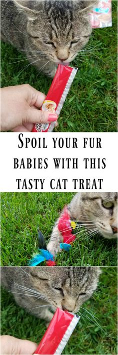 Spoil your favorite cat with these tasty cat treats - Hartz Delectables SqueezeUp - they're the new tasty cat treat on the market! #pawtastic #LickItLoveIt #catsgocrazy4Delectables #ad