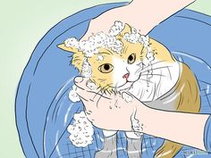 How to Bathe a Cat: 17 Steps (with Pictures)