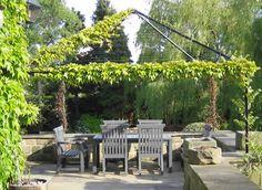 A Yorkshire Town Garden