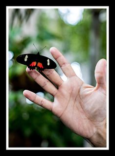 #beauty #butterfly #hand #hello! #sign #photo about life Hello Sign, Butterfly, Life, Beauty, Beauty Illustration, Butterflies