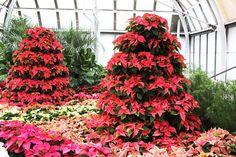 Catch Merry and Bright at Franklin Park Conservatory! This post is written by Courtney Denning, experience designer at Franklin Park Conservatory and Botanical Gardens.