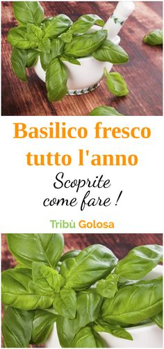 Ecco come avere il #basilico fresco tutto l'anno #tribugolosa #gourmettribe #golosiditalia #cucina #cucinaitaliana #cucinare #italianrecipes #food #italianfood #foodstyling #yummy #foodlover #ricette #recipe #homemade #delicious #ricettefacili Food Hacks, Vegetable Garden, Whole Food Recipes, Spinach, Buffet, Spices, Herbs, Vegan, Canning