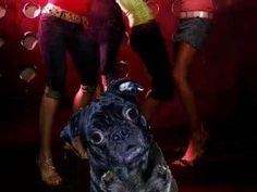 I'm a Pug! Woop - Morphing REMIX