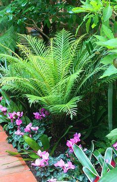 Frost tolerant ferns - to buy Spring Blechnum. Tropical Garden Design, Tropical Landscaping, Tropical Plants, Yard Landscaping, Garden Waterfall, Red Tree, Ornamental Grasses, Back Gardens, Shade Garden