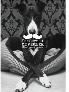 Here at Dowse we're supporting Movember. The shop whippet encourages you too.