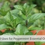 Five MUST HAVE Essential Oils for DIY Recipes | Herbs and Oils Hub