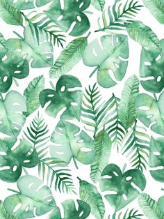 Tropical Jungle On White Posters By Tangerine Tane
