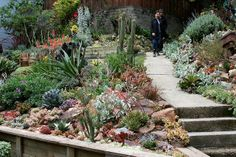 succulents and stones   Flickr - Photo Sharing!