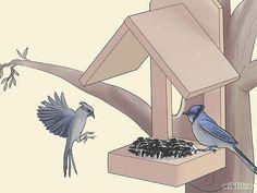 Attracting Blue Jays (nesting platform, feeder, etc.)