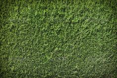 Green wall background - Stock Photo - Images