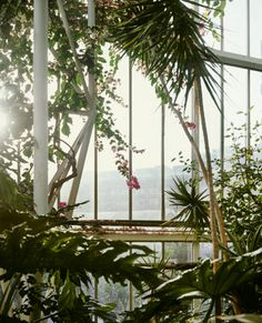 The Barbican Conservatory, London is an extraordinary mix of 'brutalist' architecture and lush green vegetation.   Photography by Misha de Ridder in Cos Magazine