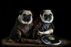 Lotr pugs