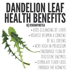 Liver Cleanse Remedies Dandelion Leaf - These are some of the most healthy greens you can eat. If you are picking them in the wild or your lawn, make sure NO pesticides have been sprayed in the area! Dandelion Leaf Benefits, Dandelion Leaves, Dandelions, Dandelion Oil, Healing Herbs, Natural Healing, Natural Medicine, Herbal Medicine, Natural Cleanse