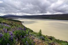 Lagarfljót, Islande. #iceland  http://www.morka.fr