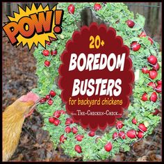Whenever chickens are suddenly confined to spaces smaller than they ordinarily enjoy, boredom and behavioral problems such as feather picking, and egg-eating can result. By having some go-to boredom b (Chicken Backyard Happy) Chicken Toys, Chicken Treats, Chicken Chick, Fresh Chicken, Chicken Houses, Farm Chicken, Chicken Lady, Keeping Chickens, Raising Chickens