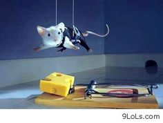 Mission Impossible, mouse get the cheese! hello summer   zendictive