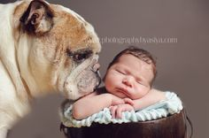 Cats+with+Their+Baby | Newborn Babies with their Dogs & Cats {New Jersey Newborn Photographer ...