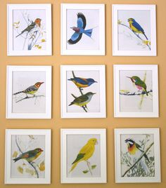 9 birds