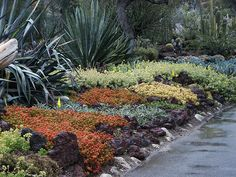 Succulent ground cover in colors, Huntington Library Desert Garden, 076