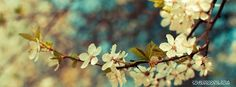 beautiful-spring-day-facebook-cover
