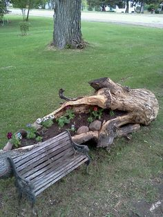 A log flower bed.  I'm trying to do something similar with the big log in the backyard.  Attempting to cultivate a zen space.