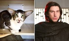 Cat looks suspiciously like Star Wars character Kylo Ren