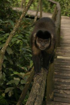 Parque Ecológico de Maracajá - SC - Brasil