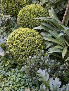 Projects | Myles Baldwin Design Plant Design, Garden Design, Australian Native Garden, Rose Bay, Contemporary Garden, Plant Species, Landscaping Plants, Shade Garden, Outdoor Rooms