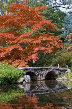 Maymont Japanese garden Richmond, Virginia Japanese Maple trees are beautiful all year  love them