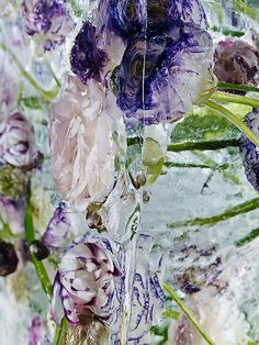 Astonishing Photos of Dying Flowers Trapped in Ice - Feature Shoot A Touch Of Frost, Horticulture, Shades Of Green, Fine Art Photography, Ethereal, Photo Art, Gallery, Nature, Naturaleza