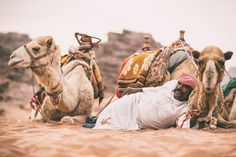 A Man And His Camels by Michael Bonocore