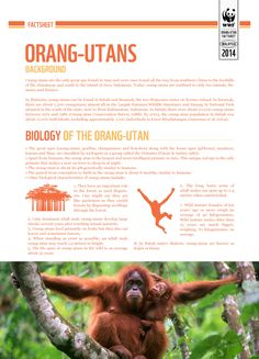 EXTINCTION IS FOREVER : Learn some interesting facts about Orangutans, one of our close relatives.