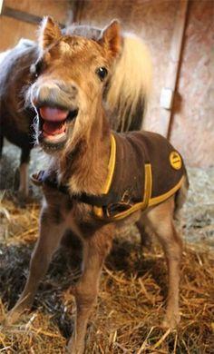 Assez miniature horses for sale in arizona; miniature horses for sale in  FS88