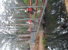 One Tree Bridge