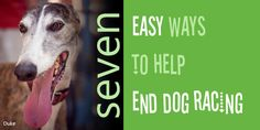 Seven easy ways to help end dog racing