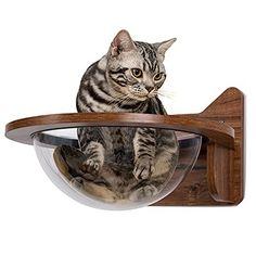 Cat Window Perch, Cat Perch, Cat And Cloud, Cat Wall Furniture, Kitten Beds, Wood Cat, Cat Hammock, Cat Shelves, Cat Accessories
