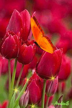 "Tulips.   (Gif - ""Тюльпаны."")"