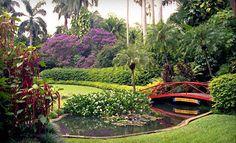 Sunken Gardens is a world-class botanical garden near downtown St Petersburg, FL - perfect for an outdoor St Pete garden wedding!