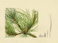 Fjord Illustration: Botanical artwork and pet portraits by Melbourne based illustrator, Jessie Ford.