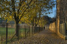 Rose Walk, Christchurch Meadow, Oxford   by thriddle