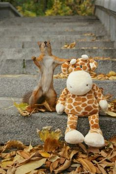 Picture Used on NSVH.  October is Squirrel Awareness Month Album.  Squirrels can make friends too! #squirrels