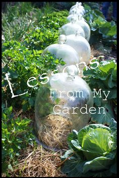 Inspirational gardening post from Stone Gable blog