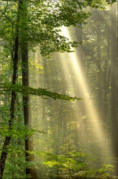 Ray lights in the forest Forest Light, Tree Forest, Beautiful World, Beautiful Places, Beautiful Pictures, Mystical Forest, Walk In The Woods, Beautiful Landscapes, Nature Photos