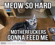 Meow so hard