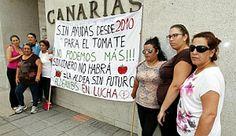 Las mujeres de La Aldea salvan al sector tomatero de los incumplimientos del Gobierno de Canarias.