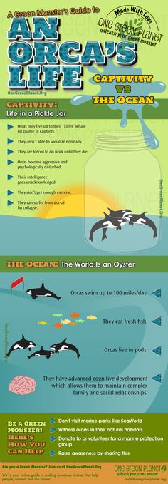 http://onegr.pl/QJt3a0  #orca #killerwhale #seaworld #infographic #animal #vegan #captivity #anti-cap #pro-cap