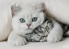 Cute cats 44 - Click on the picture for more cute cats and pets info and pictures. #Cats #CuteCats #Pets