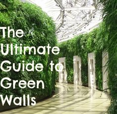 The Ultimate Guide to Green Walls