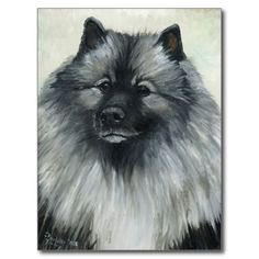"""Keeshond"" Dog Art Postcard    Click on photo to purchase. Check out all current coupon offers and save! http://www.zazzle.com/coupons?rf=238785193994622463&tc=pin"
