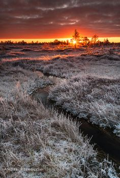First rays of morning by andreireinol  sky landscape frozen winter water cold travel sun light clouds europe tree beautiful colors estonia